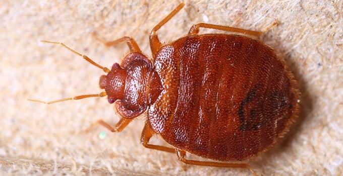 Bed Bug Control Heat Treatment Experts Serving Topeka Phoenix