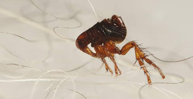 Blog - Protecting Your Home And Yard From Fleas