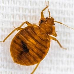 Top 10 Places Bed Bugs Like To Hide Schendel Blog