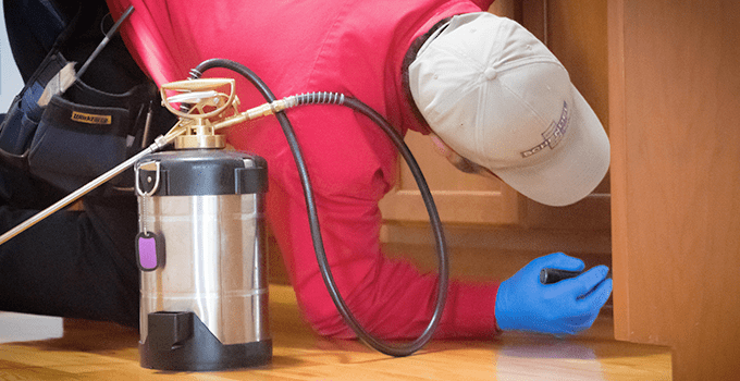 Pest technician working